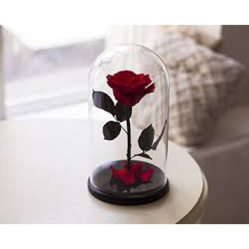 Купить на заказ Роза в колбе Красная с доставкой в Нур-Султане