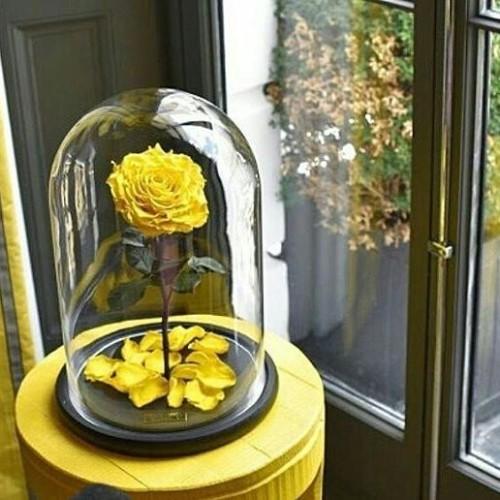 Купить на заказ Роза в колбе желтая с доставкой в Астане