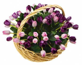 Купить тюльпаны в Караганде
